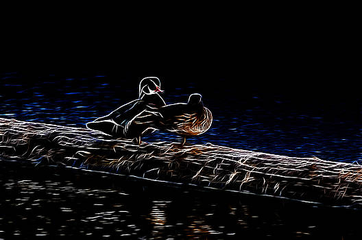 LAWRENCE CHRISTOPHER - WOOD DUCK PAIR - FRACTAL