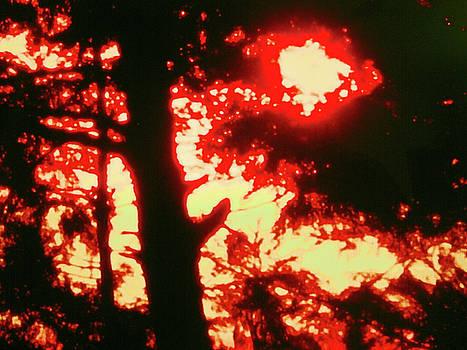 Wood Fire. by Maneesh  Kumar