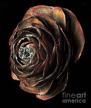 Russ Brown - Wood Rose