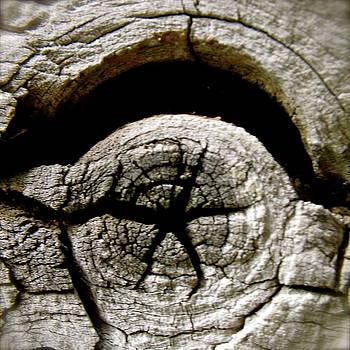 Wood Star by Tina Valvano