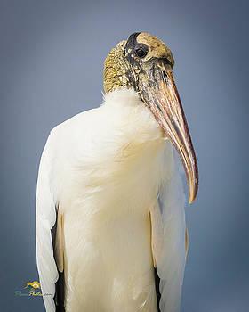 Wood Stork by Jim Thompson