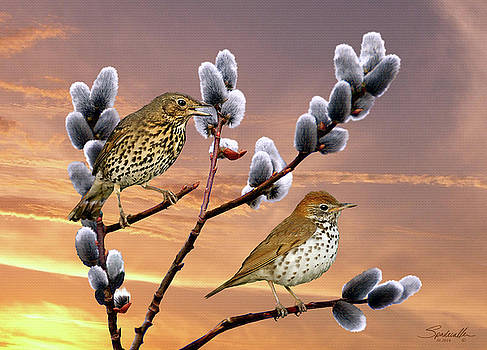 Wood Thrush and Pussy Willow Tree by Spadecaller