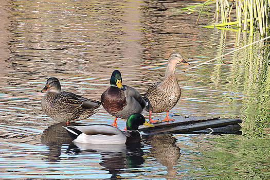 Woodies at Neary by Grace Dillon