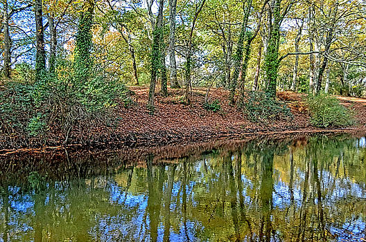 Woodland Canal 2 by Bishopston Fine Art