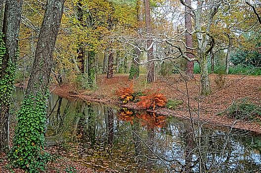 Bishopston Fine Art - Woodland Canal