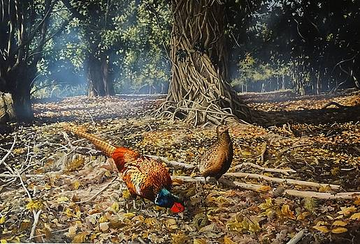 Woodland pheasants by Julian Wheat