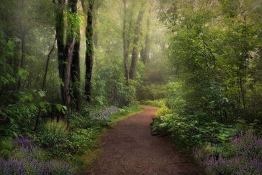 Woodland Spring by Robin-lee Vieira