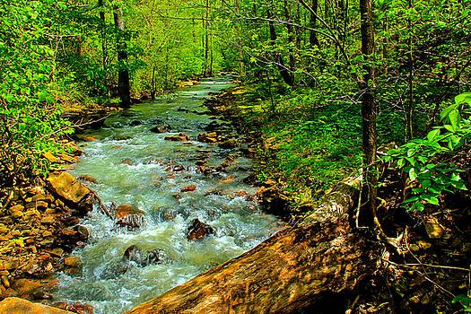 Woodland Stream by Carolyn Wright