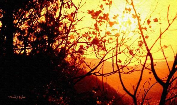 Woodland Sunset by Frank Wilson