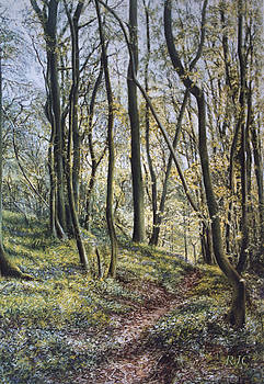 Woodland Wanderings by Rosemary Colyer