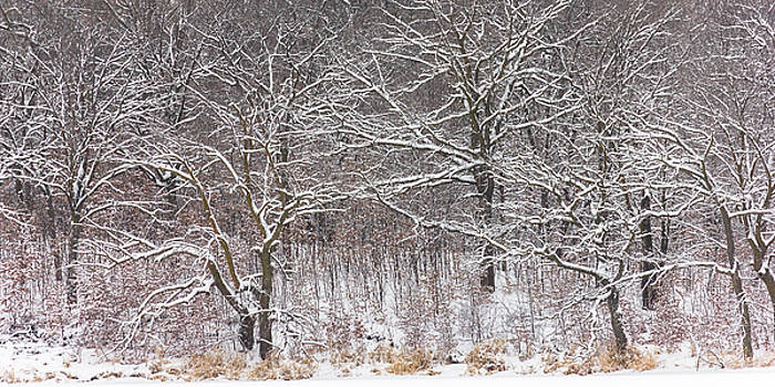 Woodland Winter by Penny Meyers