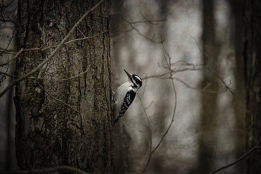 Woodpecker by Angie Rea