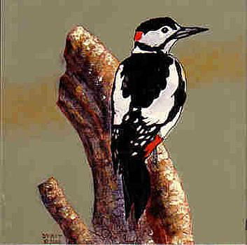 Woodpecker by Dy Witt