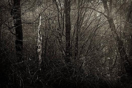 Woodprecker Tree by Bob Orsillo