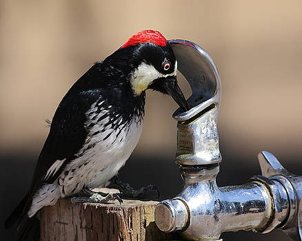 Wingsdomain Art and Photography - Woody and the Water Fountain