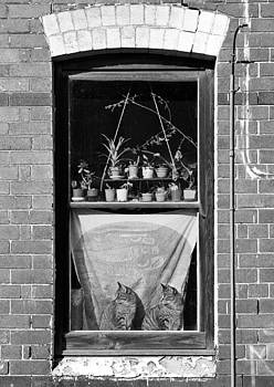 Woolloomolloo Window with Cats by Barry Culling