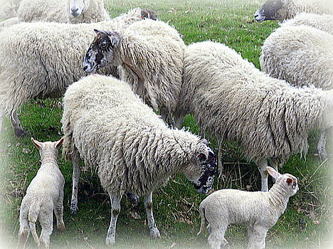 Wooly Times by Mindy Newman
