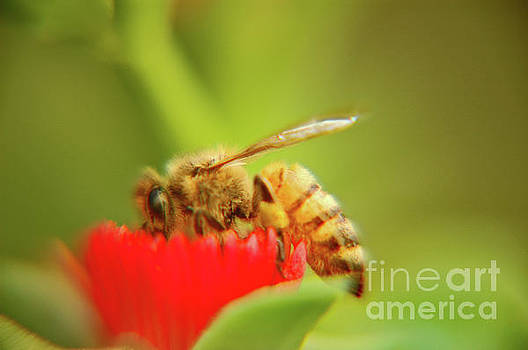 Worker bee by Micah May