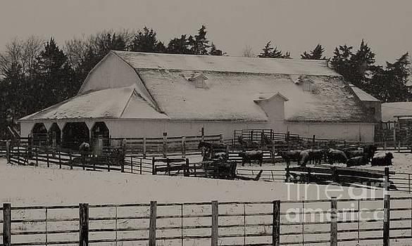 Working Cattle Barn by J L Zarek