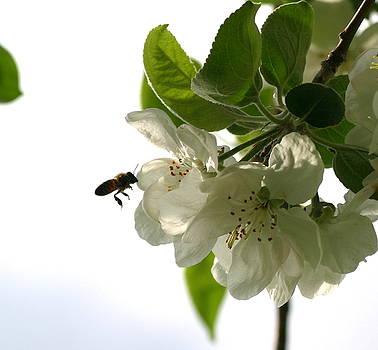 Working Honeybee by Laurie Penrod
