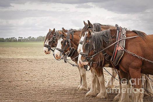 Working Horses by Linda Lees