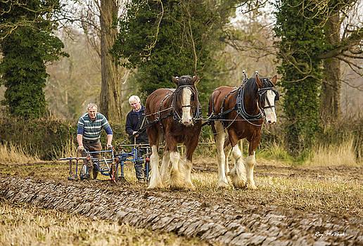 Working horses by Roy McPeak