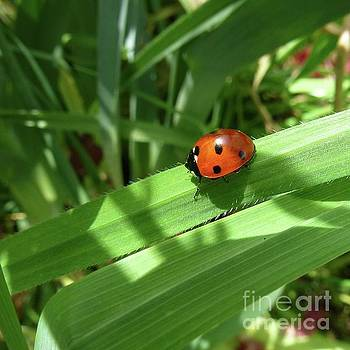 World of Ladybug 1 by Jean Bernard Roussilhe