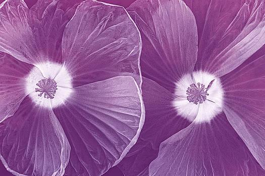 World of Petals II by Leda Robertson