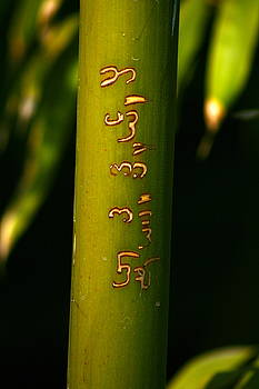 Written Bamboo 01 by April Holgate