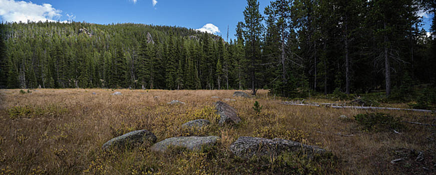 Wyoming Forest Clearing by Steve Gadomski