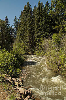 Wyoming Mountain Stream by Natural Focal Point Photography