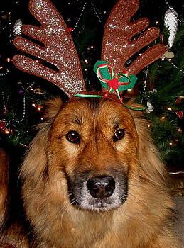 Diane Merkle - Yeah yeah Merry Christmas