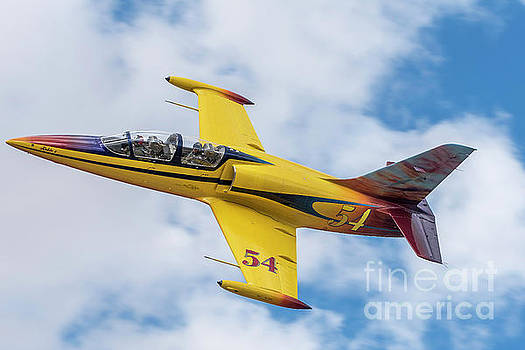 Yellow Albatross At PRS 2016 by Steve Rowland