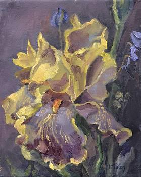 Yellow and Purple Iris by Donna Tuten
