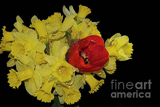 Yellow And Red by Elvira Ladocki