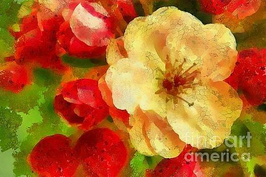 Yellow and Red Floral Delight by Catherine Lott