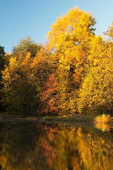 Yellow Autumn by Amanda Kiplinger