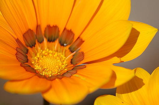 Yellow Burst by Lucia Vicari