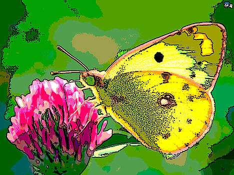 Yellow Butterfly by Charles Shoup