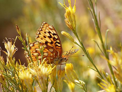 Yellow Butterfly by Marcia Socolik
