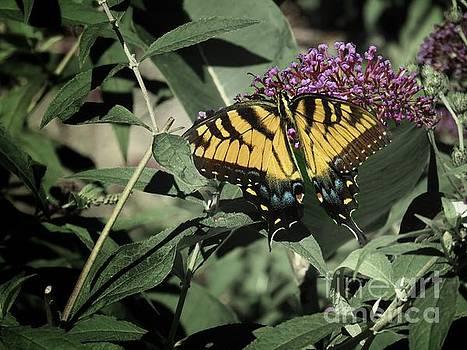 Yellow butterfly by Rrrose Pix