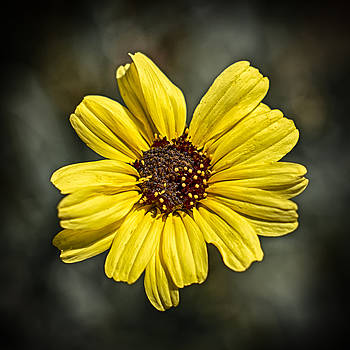 Yellow Corolla by Scott  Wyatt