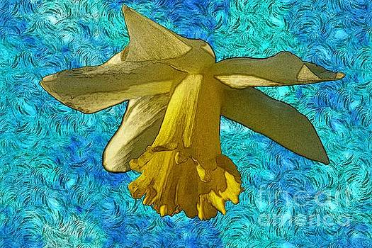 Yellow Daffodil 3 by Jean Bernard Roussilhe