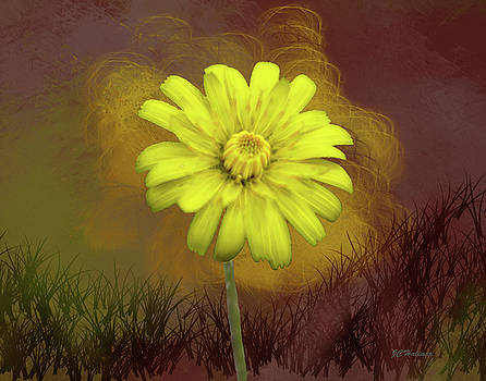 Yellow Daisy by Joe Halinar