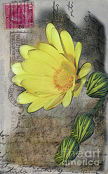 Yellow Daisy on Vintage 1916 Postcard by Nina Silver