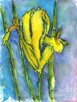 Yellow Dutch Iris by Bev Veals