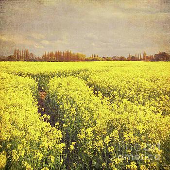Yellow Field by Lyn Randle