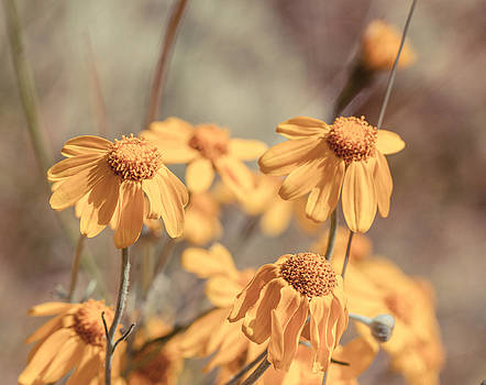 Yellow Flower by Danielle Silveira