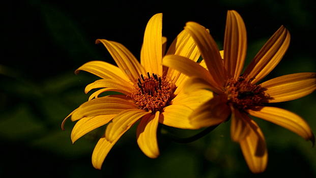 Yellow Flower by Justin Soules