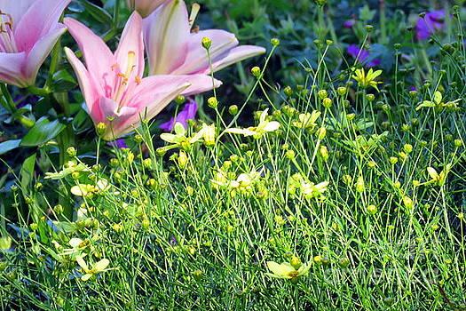 Yellow Flower Sprigs by Selma Glunn